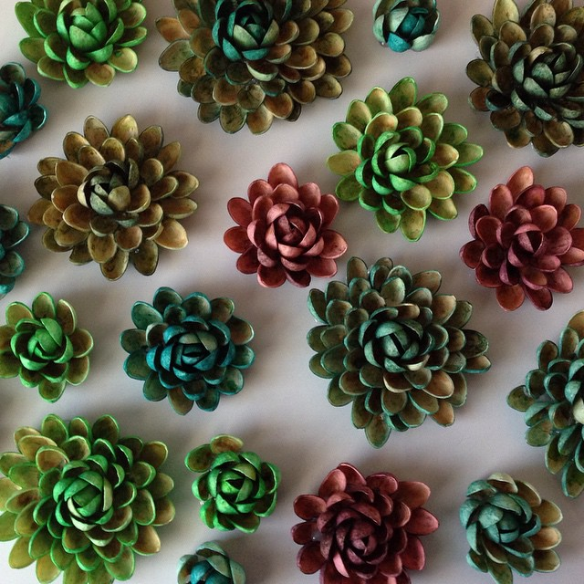 Pistachio shell #succulents dyed with food coloring. They look really realistic.