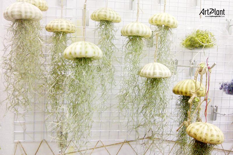 art plant | cay khong khi | tieu canh khong khi | terrarium | khong khi toc tien