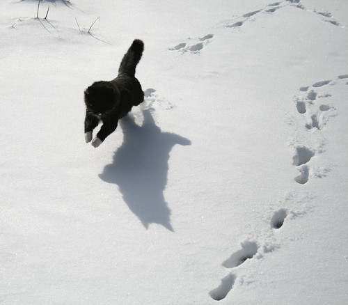 Zak chasing shadows