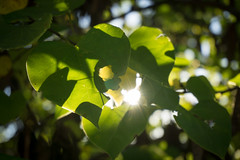 Sunny Greens