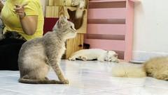 Kittycat ♥