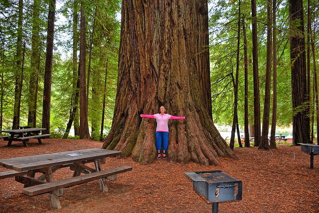 Giants at Jedediah Smith Redwoods State Park