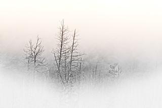 Fog-over-Forrest,-Off-Highway-35-near-Minden,-Ontario,-September-2014_DSC1476-DXO