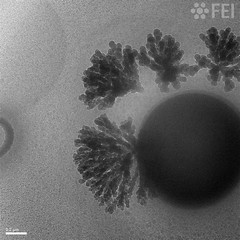 Carbon nanotrees growing out of a contamination spot