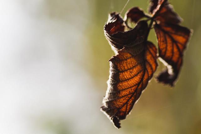 [203] Autumn Leaves