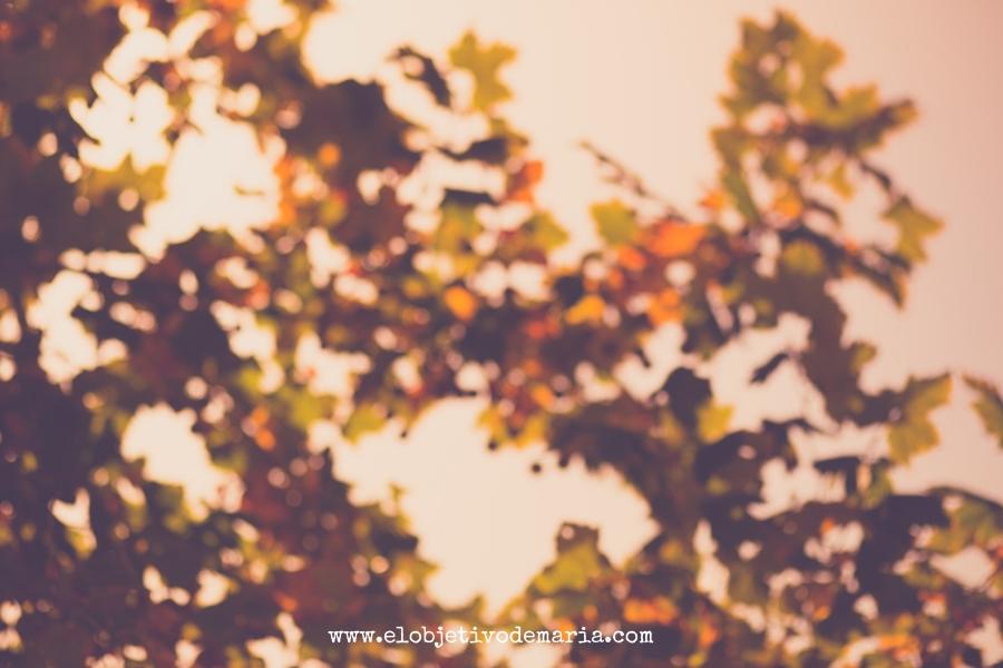 otoño desenfocado