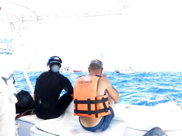 Whale Sharks 128