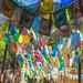 Animal Kingdom - Prayer Flags