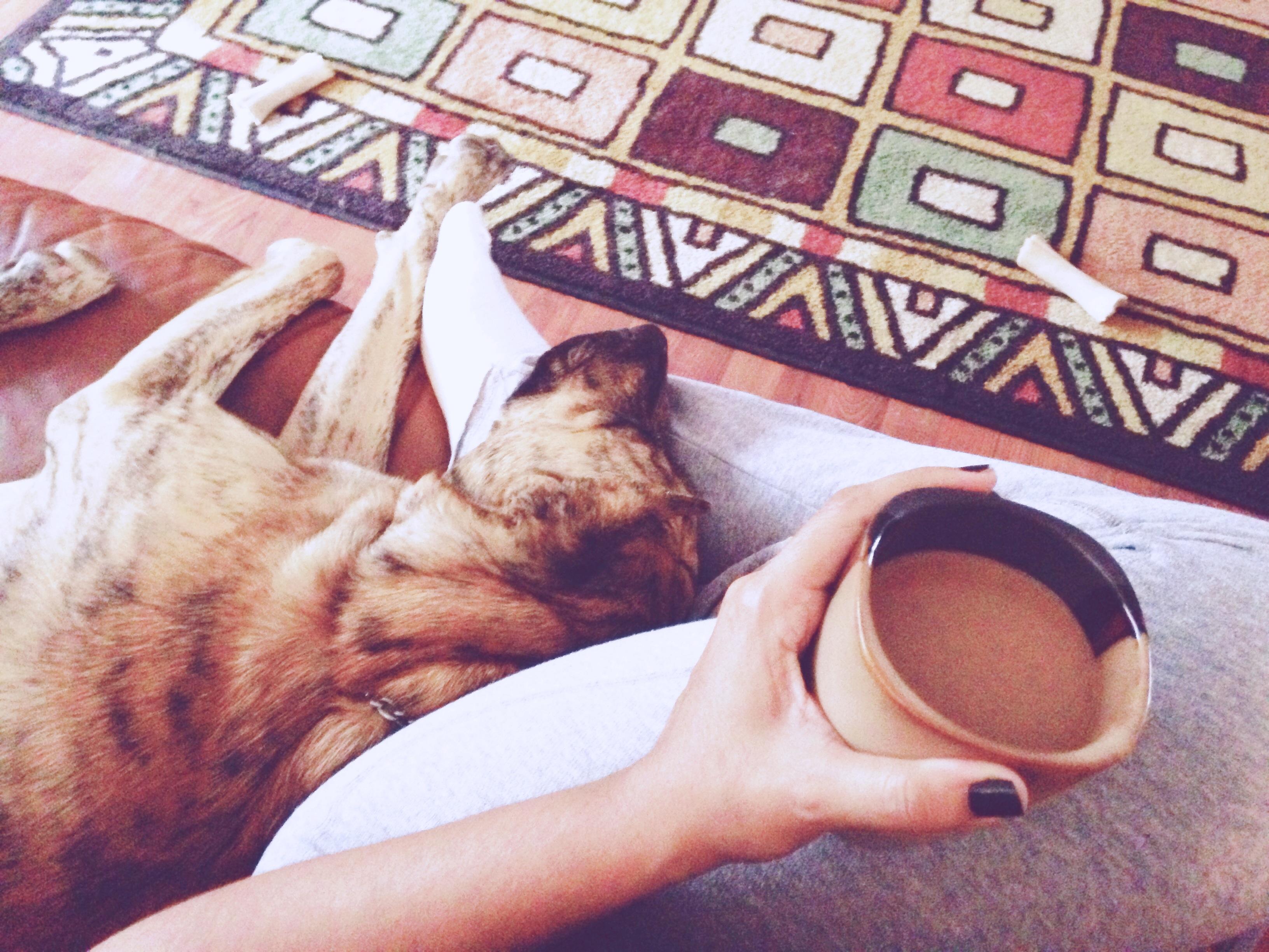 tituscoffee