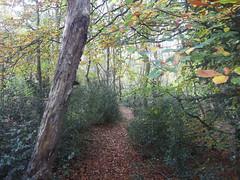 treesnewtowncommon