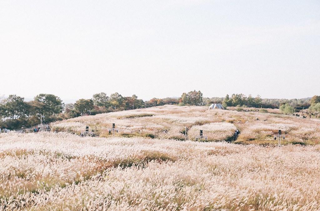 Địa điểm sống ảo tại Seoul - Sky Park