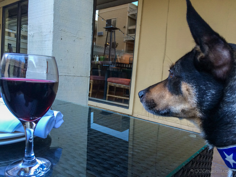 Mort checking out Chows at dog friendly Three Degrees restaurant in Los Gatos, CA.