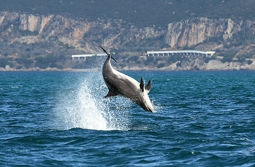 Portugal's Wolves & Dolphins - A Photographic Tour - photo#18