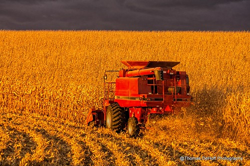 lighting golden corn sony dramatic iowa case hour combine ih 2366 a580