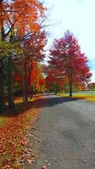 Chemin du Camping en automne