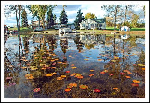 autumn michigan lilypads irishhills deweylake lenaweecounty