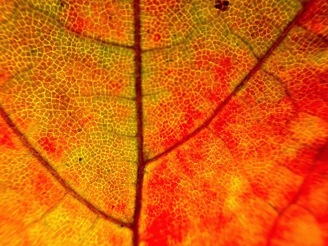 leaf-texture