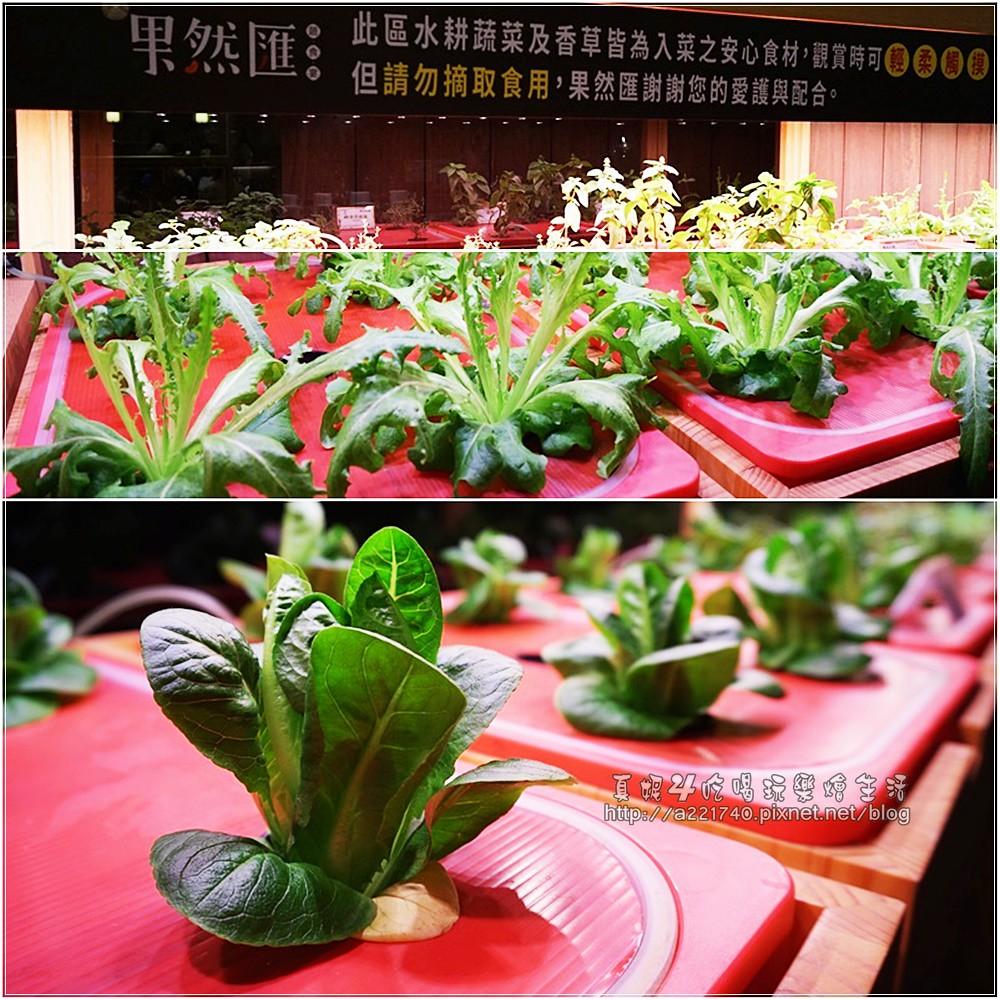 03水耕蔬菜