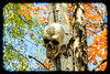 10112014_kelby-skully-1227