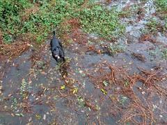 Splashy dog
