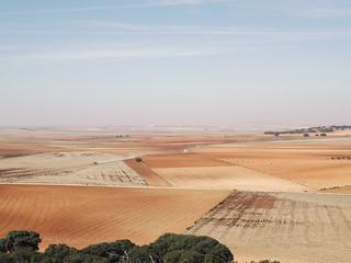 Campos de Villcañas a lo largo del camino de Madridejos
