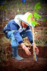 Soneva Forest Restoration Project, Chiang Mai 09