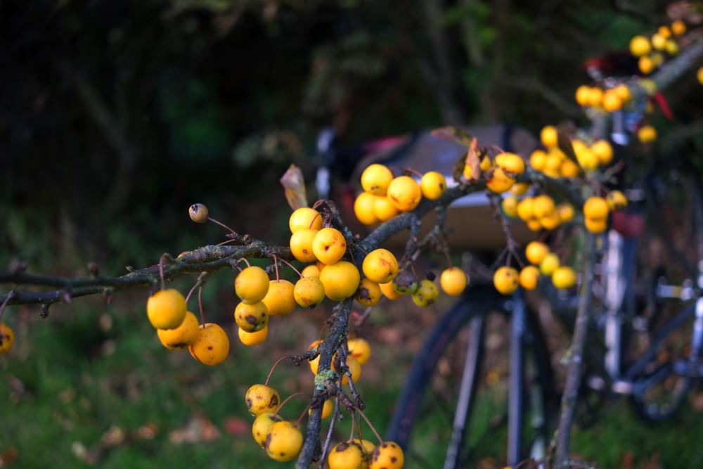 Tiny Yellow Apples