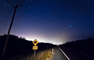 The Nocturnal Koala - Australian Street Sign
