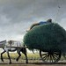 El carro pastero - The alfalfa cart - La Siesta by Molina Campos - Catálogo Oficial