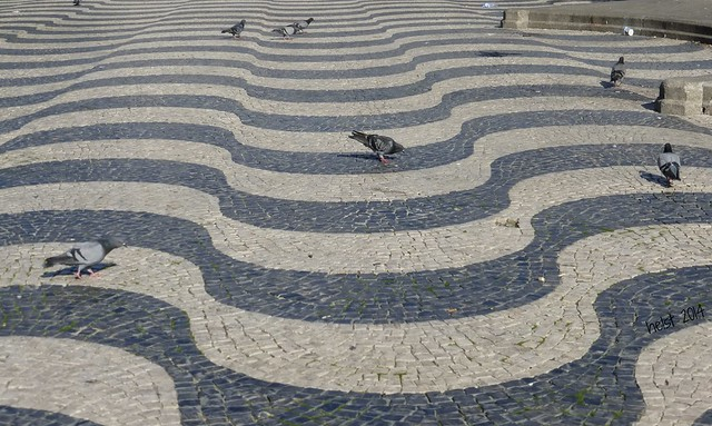 Tauben und Wellen - piccioni e onde - pigeons and waves, Calcada, Lissabon, Praça da Figueira (1849)