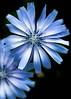 Flower's Beauty DSC_0004_edit