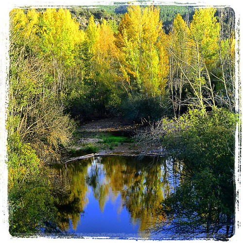 Autumn tints the forests