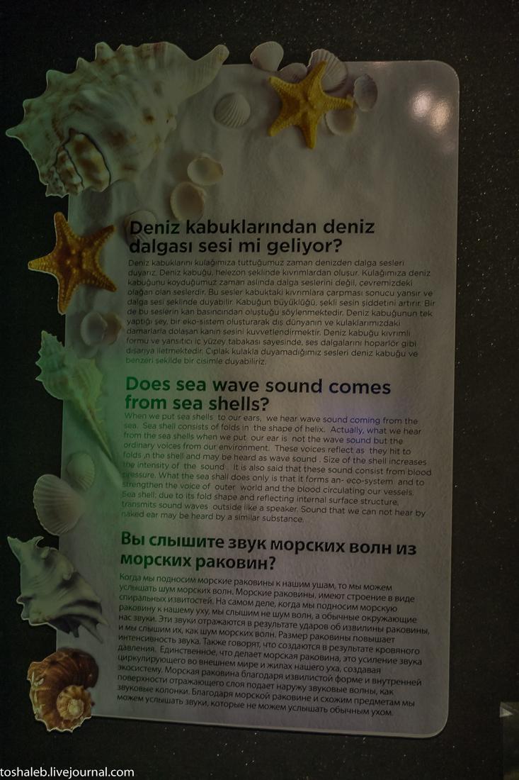 Анталья_аквариум-45