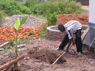 irrigation of banana trees