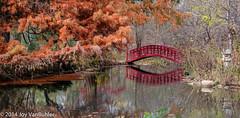 305/365 - Japanese Gardens at Cranbrook
