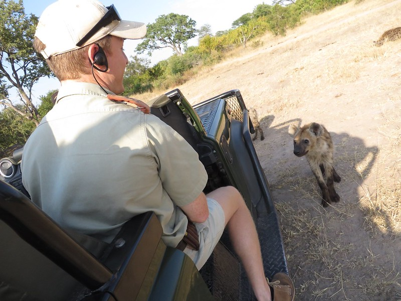 A hyena and a safari ranger