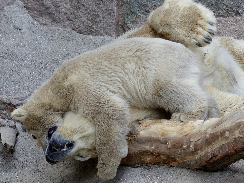 Playful fight with Mom :)