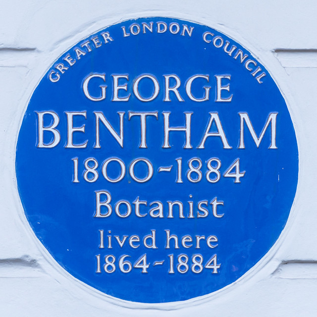 George Bentham blue plaque - George Bentham 1800-1884 botanist lived here