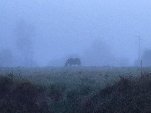 Horse in the fog… #horse #fog #sunrise #spring #amanecer #primavera #niebla #caballo #cavalo #nevoeiro