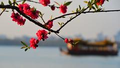 Hangzhou - Spring at the West Lake