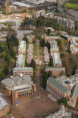 University of Washington, The Quad and Cherry Blossoms (4)