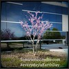 Cercis canadensis Yes, we install on Saturdays while your employees are not at work.  #everydayisEarthDay #designedbyalandscapearchitect  #SemiramisStudioLandscapeArchitecture