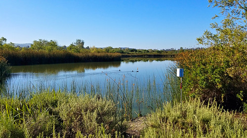 sanjoaquinwildliferefuge irvine california photo digital spring morning pond lake wetland