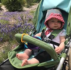 Sunshine and purple flowers