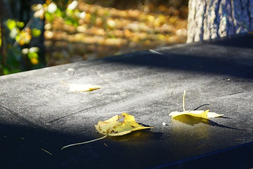 Yellow Leaves on Picnic Table