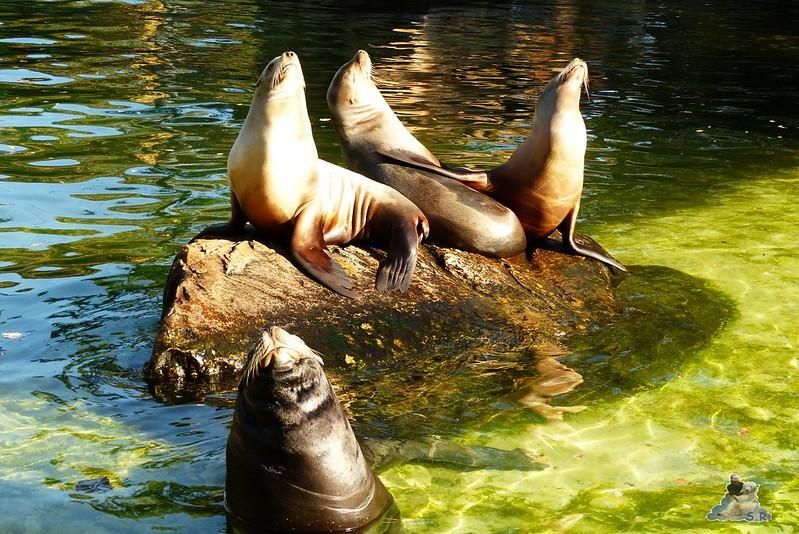 Berliner Zoo 17