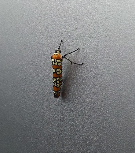 colorful bug photo