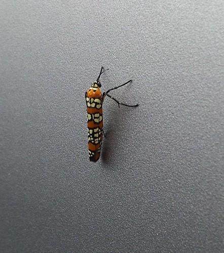 colorful bug photo