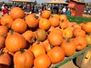 Bishop's #PumpkinFarm