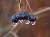 Drops,,